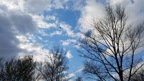 Vol d'oiseau en automne nuageux de ciel bleu photo libre de droits