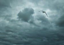 Vol d'oiseau en ciel bleu Photo stock