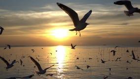 Vol d'oiseau sur le ciel bleu dans le coucher du soleil, tir de mouvement lent banque de vidéos