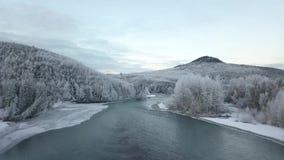Vol dans le buisson d'Alaska sauvage banque de vidéos