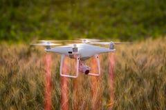 Vol de bourdon au-dessus de champ et de la cartographie de blé Photo libre de droits