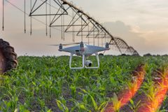 Vol de bourdon au-dessus de champ et de la cartographie de maïs Photo libre de droits