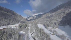 Vol de bourdon au-dessus d'une forêt alpine de Milou banque de vidéos