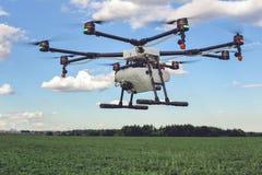 Vol de bourdon au-dessus de beau champ de vert de paysage Photo libre de droits