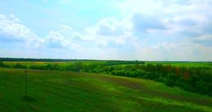 Vol de bourdon au-dessus du champ vert avec des fleurs clips vidéos