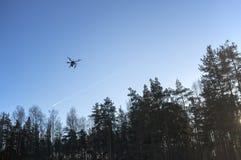Vol de bourdon dans le ciel bleu au-dessus des arbres Image stock