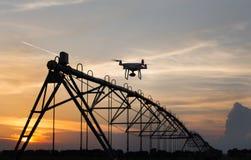 Vol de bourdon devant le système d'irrigation dans le domaine au coucher du soleil Image libre de droits