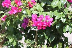 Vol de Buttherfly dedans autour des arbres Photographie stock libre de droits