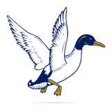 Vol de canard Photos stock