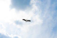 Vol de cigogne Image libre de droits