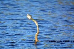 Vol de cigogne en bois aérien Photos libres de droits