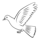 Vol de colombe Image libre de droits