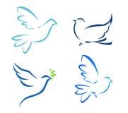 vol de colombe images libres de droits