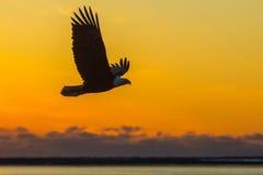Vol de coucher du soleil Images libres de droits