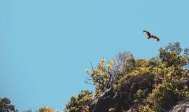 Vol de faucon andred par roche au-dessus du ciel photo libre de droits