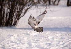 Vol de l'hiver Photographie stock libre de droits
