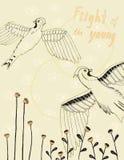Vol de le jeune Image stock