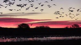 Vol de lever de soleil banque de vidéos