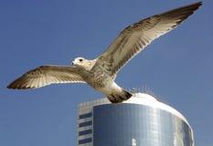 Vol de liberté Photo libre de droits