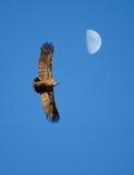 Vol de lune Image libre de droits
