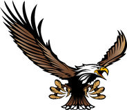 Vol de mascotte d'aigle avec des serres et des ailes Photographie stock