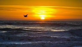 Vol de matin, côtés extérieurs, aucune Caroline Photographie stock