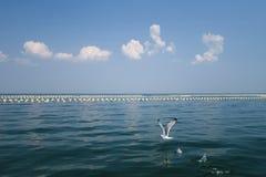 Vol de mer Photo libre de droits