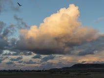 Vol de mouette au coucher du soleil en ciel orange et bleu Photographie stock libre de droits