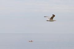 Vol de mouette au-dessus d'un bateau Photographie stock libre de droits