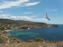 Vol de mouette au-dessus de la mer dans Sirdinia photographie stock