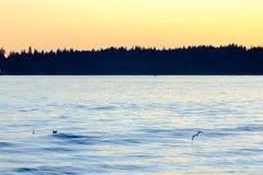 Vol de mouette au-dessus de mer photo libre de droits