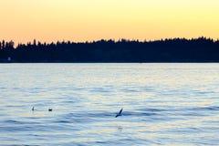 Vol de mouette au-dessus de mer images libres de droits