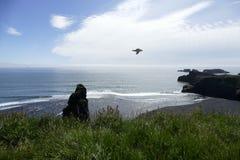 Vol de mouette aux falaises de Dyrholaey, Islande image libre de droits