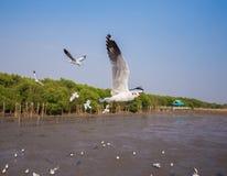 Vol de mouette avec la mer et le ciel chez Bangpu, Thaïlande Image libre de droits