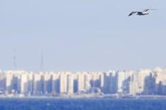 Vol de mouette d'oiseau vers la ville Images libres de droits