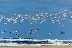 Vol de mouette dans la plage photographie stock libre de droits