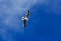 Vol de mouette dans le ciel Photographie stock