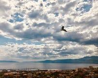 Vol de mouette dans un ciel nuageux dramatique dans le Golfe de Rijeka photo libre de droits