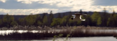 Vol de mouette dans une ligne droite au-dessus d'amarrer photo libre de droits
