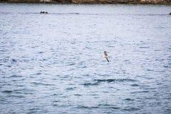 Vol de mouette par le ciel Photo stock