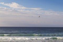 Vol de mouette par le ciel Photographie stock libre de droits