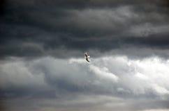 Vol de mouette par le ciel orageux photo libre de droits