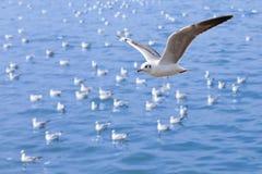 Vol de mouette sur la mer bleue Photo libre de droits