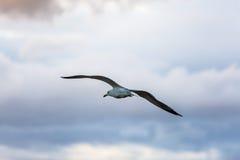 Vol de mouette sur le ciel Photo libre de droits