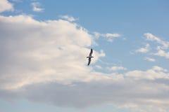 Vol de mouette sur le ciel Images libres de droits