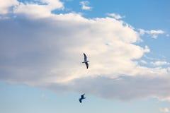 Vol de mouette sur le ciel Photos stock