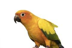 Vol de perroquet de beauté dans le domaine de riz, action Photos stock
