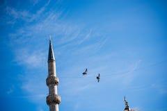Vol de pigeon en air Photo stock