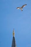 Vol de pigeon en air Photos stock