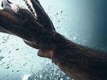 Vol de poulpe géant Image libre de droits